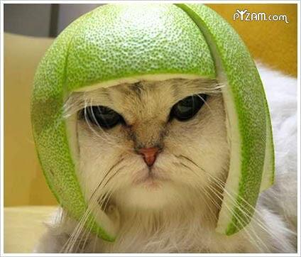 Gatos con sombreros.